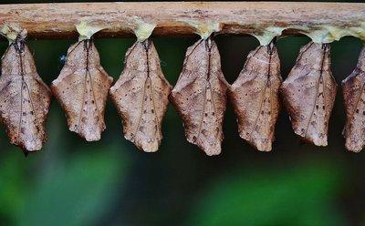 Cómo prevenir la aparición de larvas