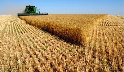Sector Agroalimentario