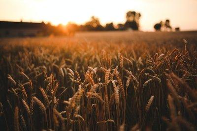 Ayudas para el apoyo a la certificación de la producción ecológica en la Comunitat Valenciana